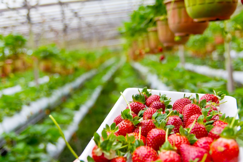 Have you heard of The Strawberry Startup?
